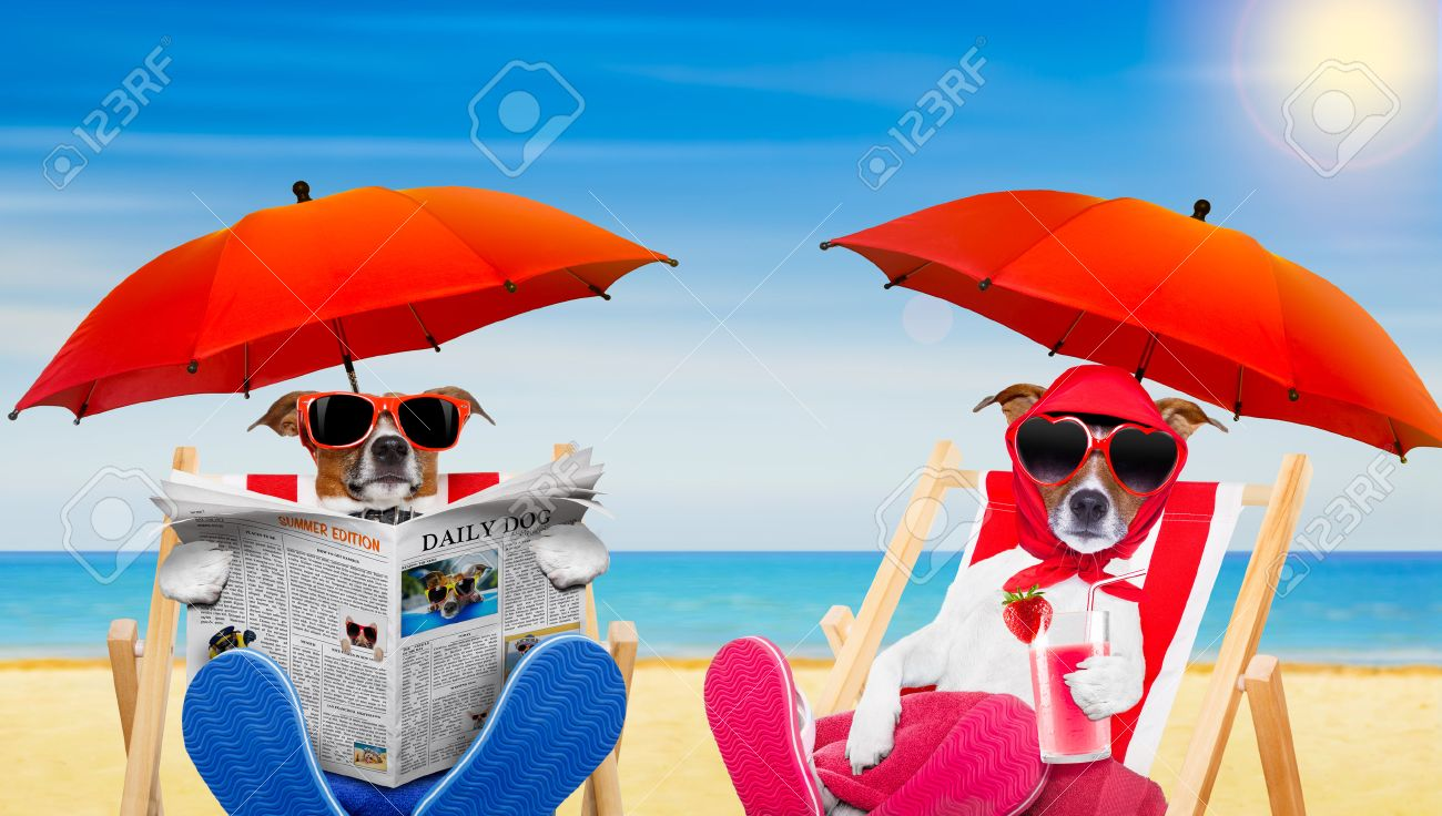 Dog Reading Newspaper On A Beach Chair With Wife Drinking Cocktail Under Umbrella At The