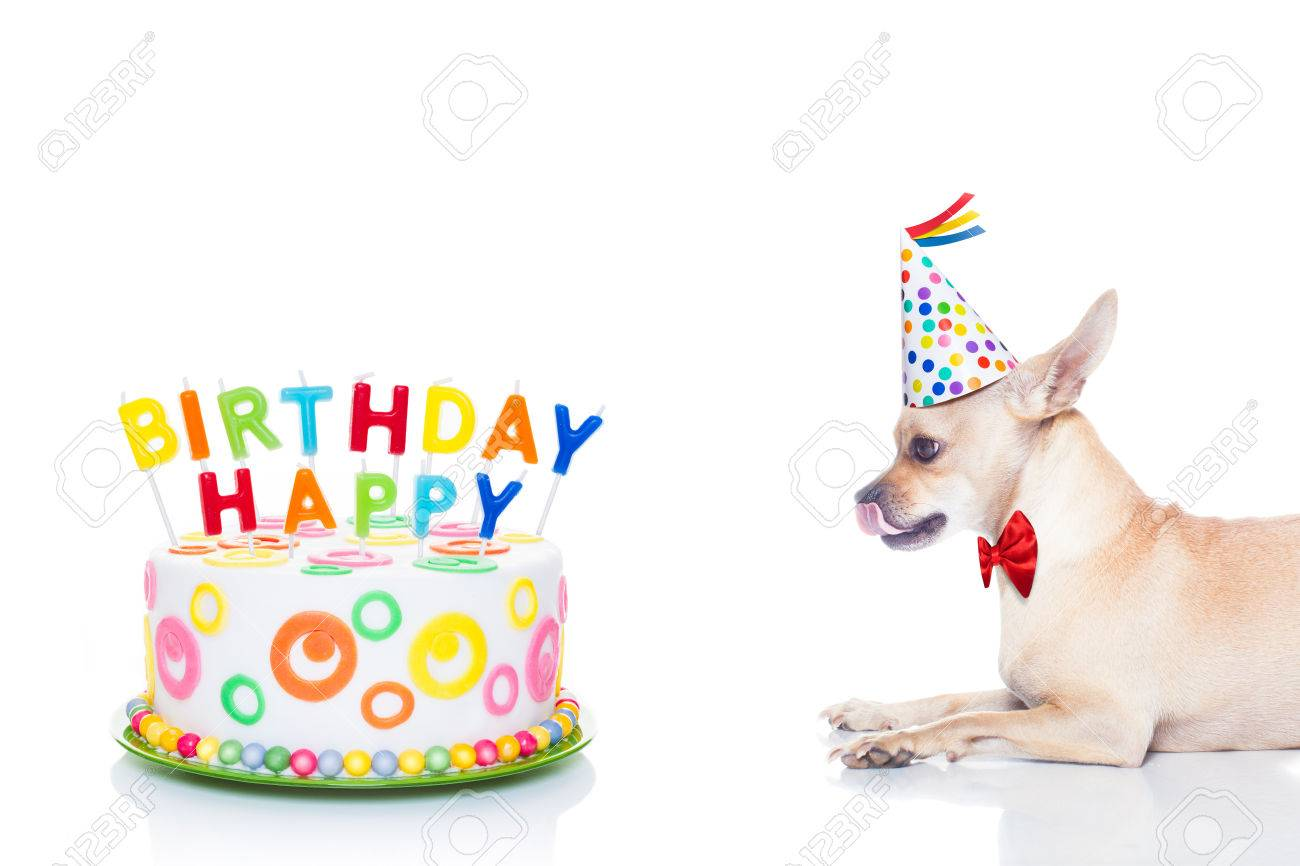 Chihuahua Dog Hungry For A Happy Birthday Cake With Candels Wearing Red Tie And Party
