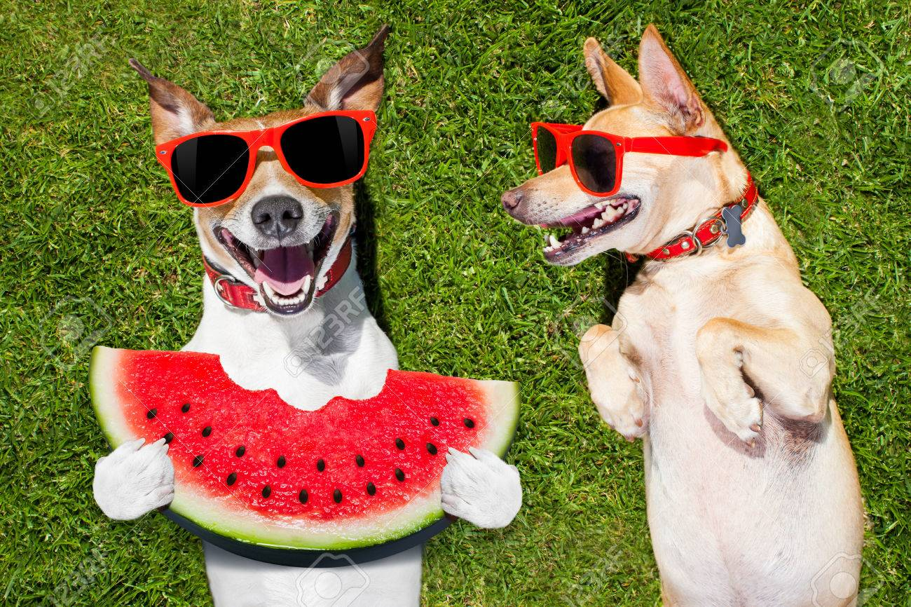 Couple Of Funny And Laughing Dogs With Sunglasses On Grass Or Meadow In Park
