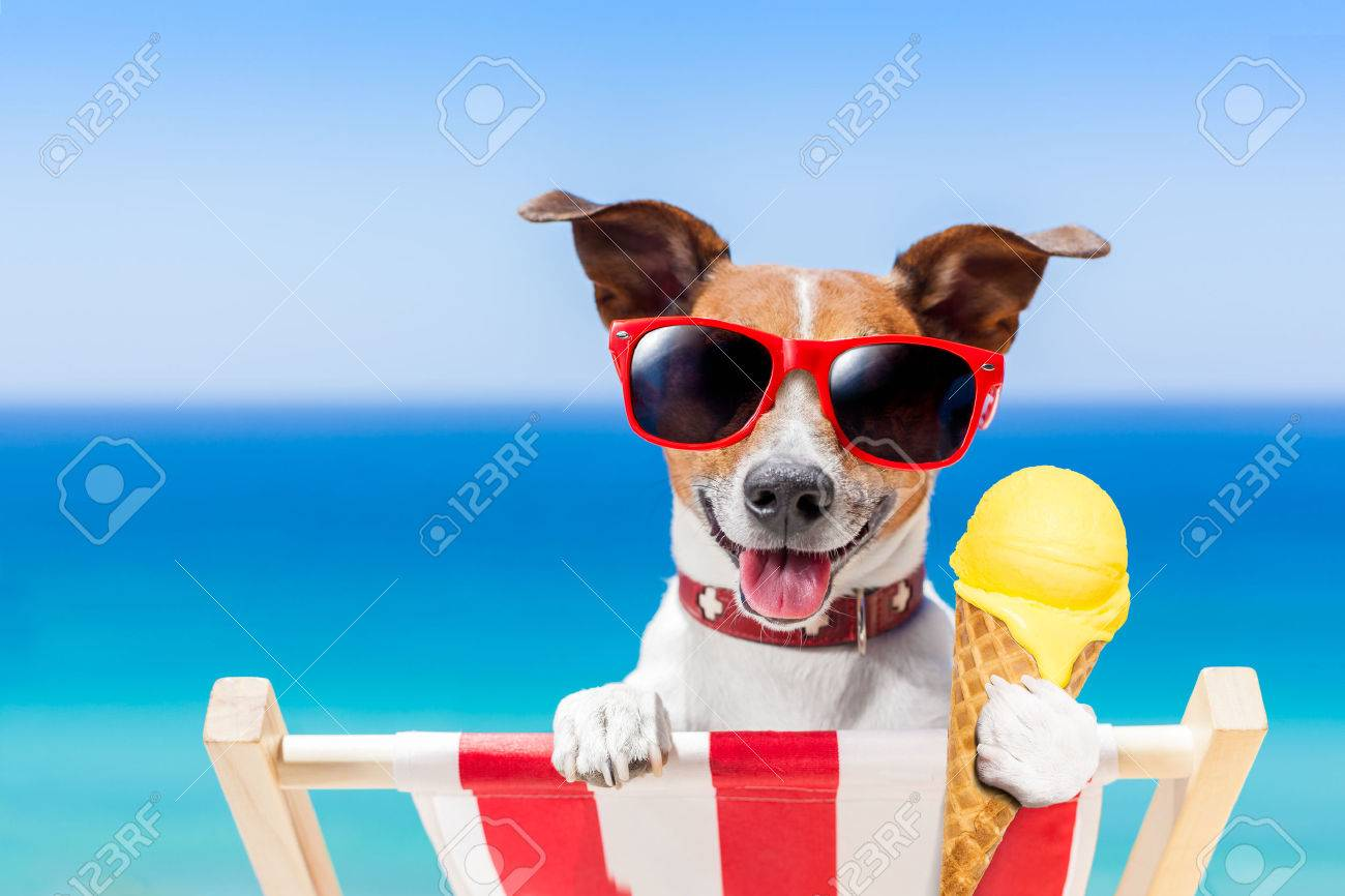 jack russell dog on hammock at the beach relaxing on summer vacation holidays eating a jack russell dog on hammock at the beach relaxing on summer      rh   123rf