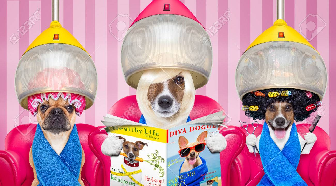 couple of dogs at the groomer or hairdresser, under drying hood,reading newspaper sitting on red chairs - 59412419
