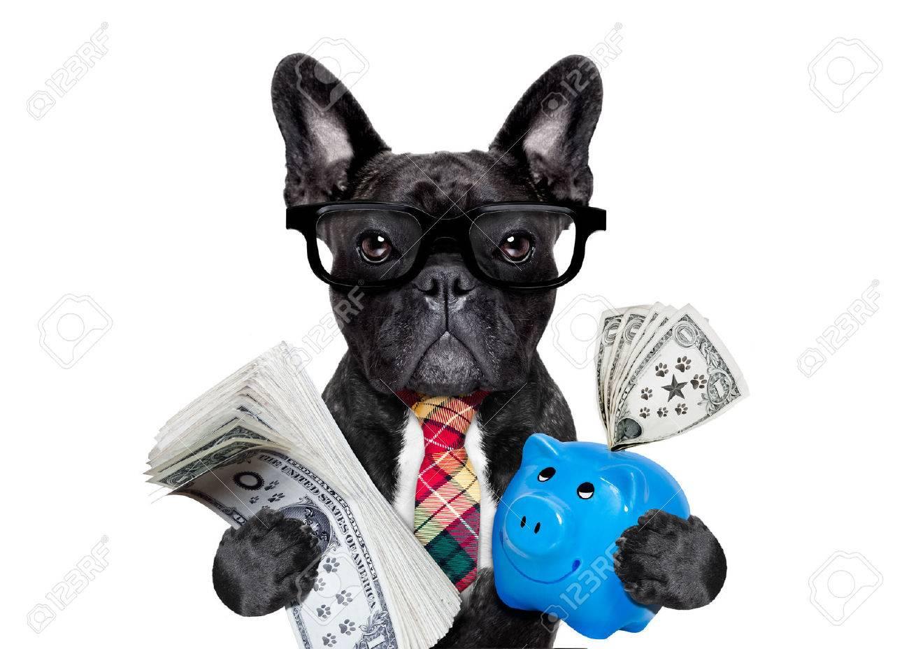 Contador ricos del jefe francés ahorro de dólares y el dinero con la hucha o hucha con gafas y corbata, aislado sobre fondo blanco bulldog
