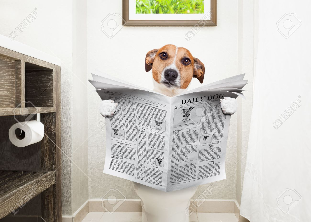 How to go to bathroom when constipated - Jack Russell Terrier Sitting On A Toilet Seat With Digestion Problems Or Constipation Reading The