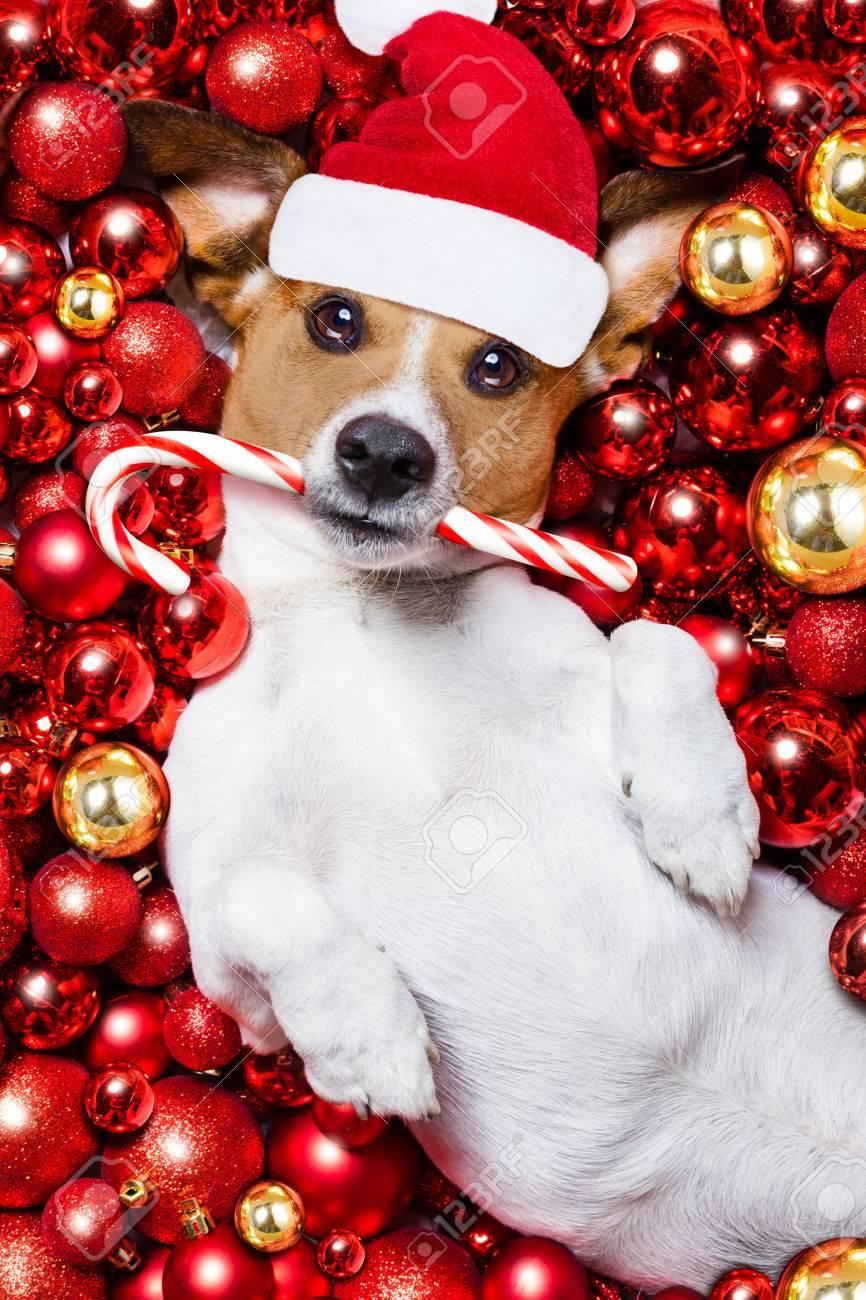 Jack Russell Terrier Hund Mit Hut Weihnachtsmann Für Weihnachten Und ...