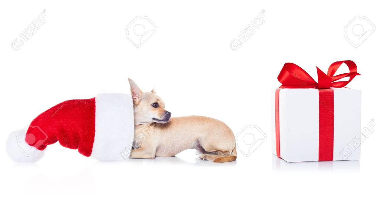 Chihuahua Hund Mit Weihnachten Roten Hut Santa Claus Für Weihnachten ...