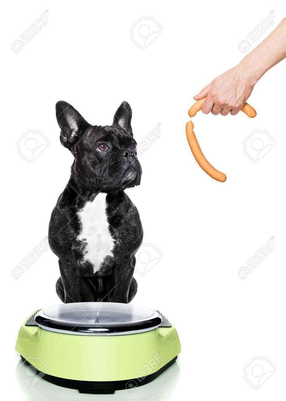 como bajar el peso de un perro