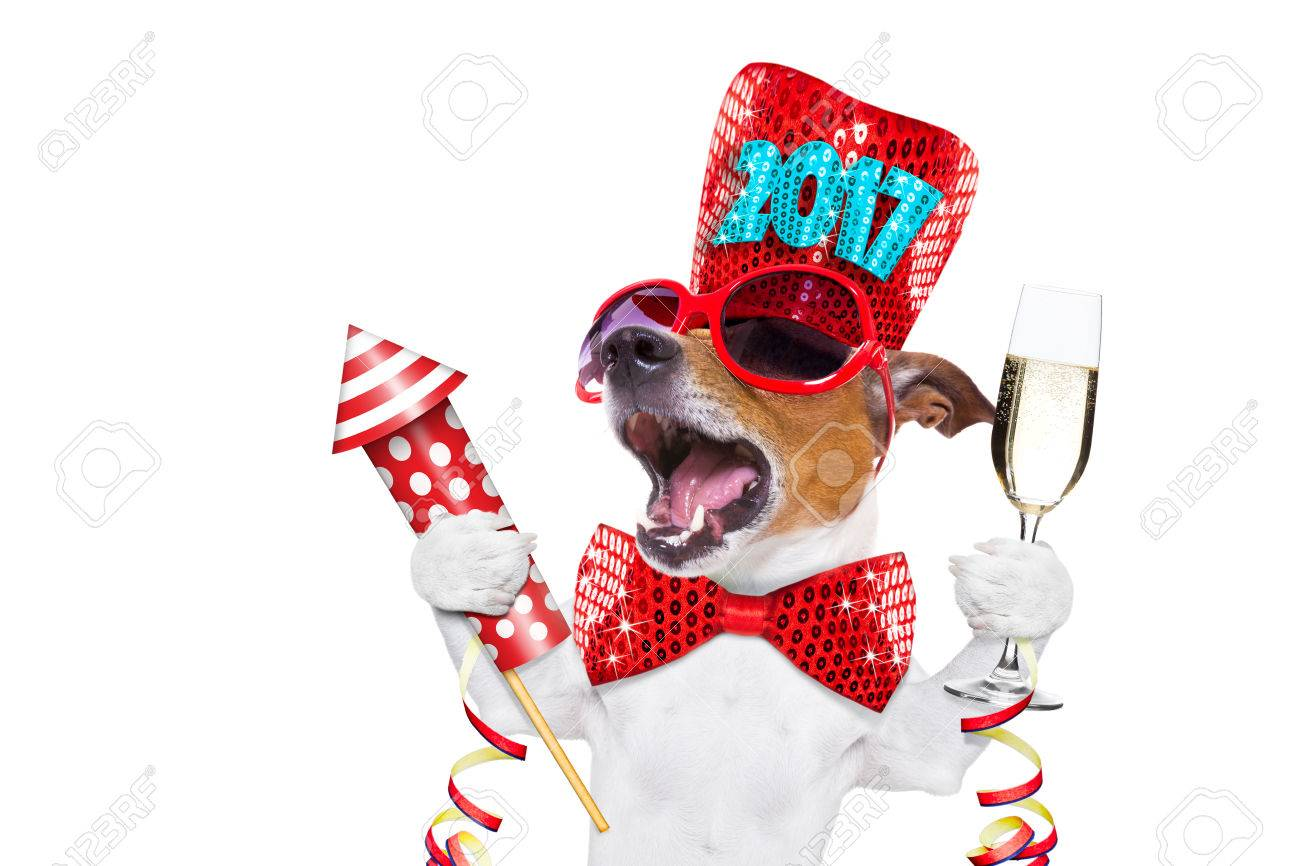 jack russell dog celebrating 2017 new years eve with champagne  glass and singing out loud, with a fireworks rocket , isolated on white background Stock Photo - 67108666