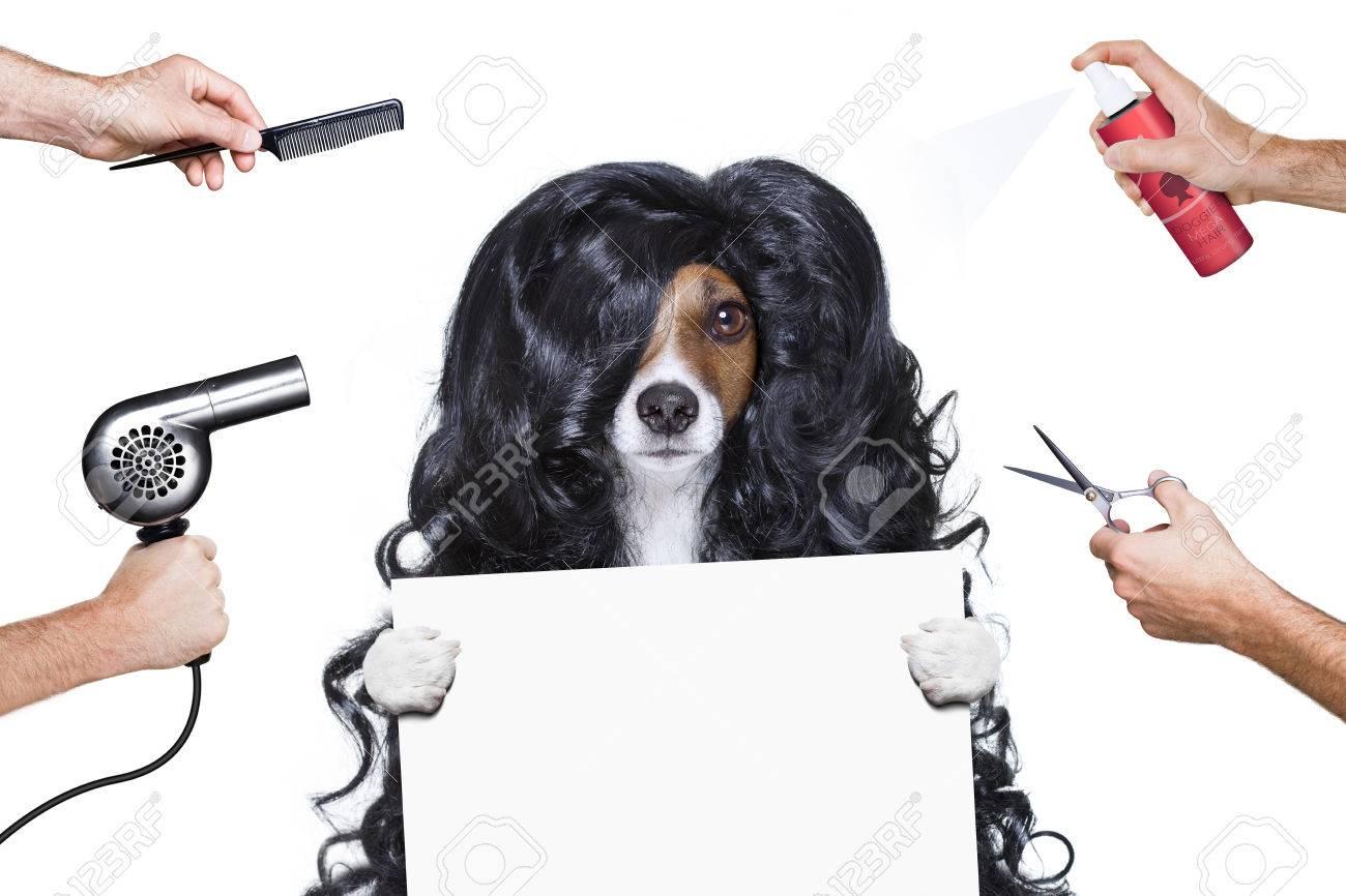 Friseur hund bereit zu schauen schön von kamm schere trockner