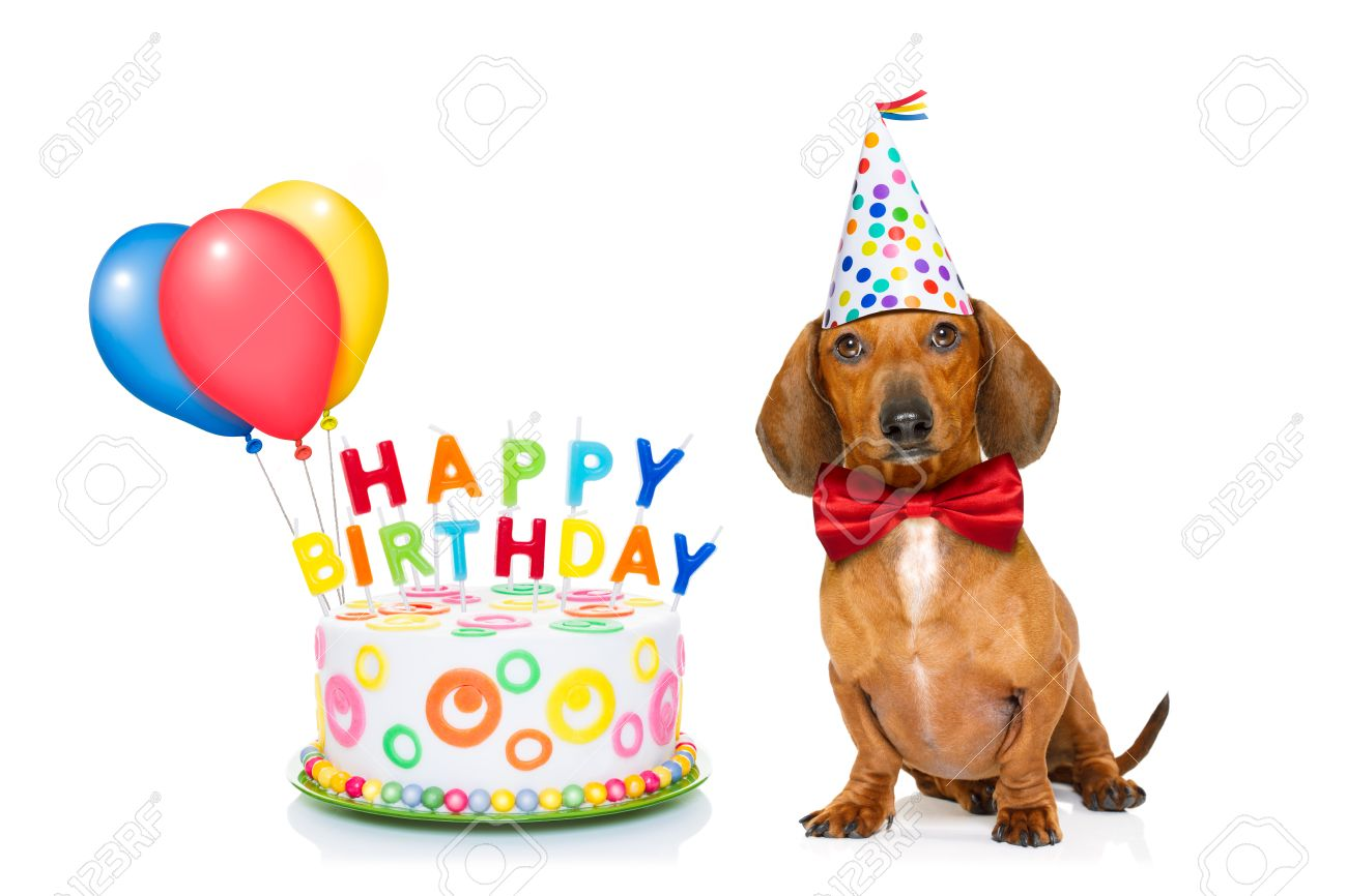 Dachshund Or Sausage Dog Hungry For A Happy Birthday Cake With Candles Wearing Red Tie