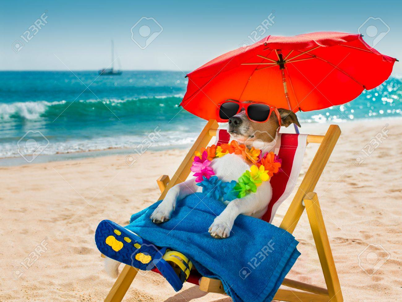 jack russel dog resting and relaxing on a hammock or beach chair