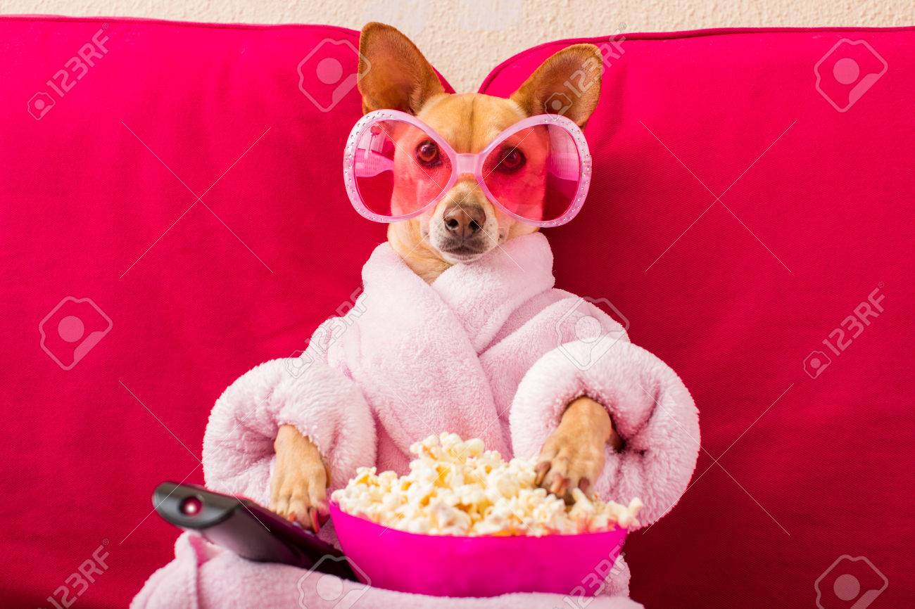 chihuahua dog watching tv or a movie sitting on a red sofa or couch with remote control changing the channels with popcorn - 77755576
