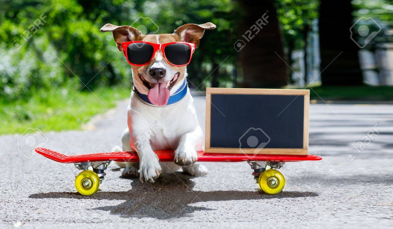 Jack Russell Terrier Dog Riding A Skateboard As A Skater With