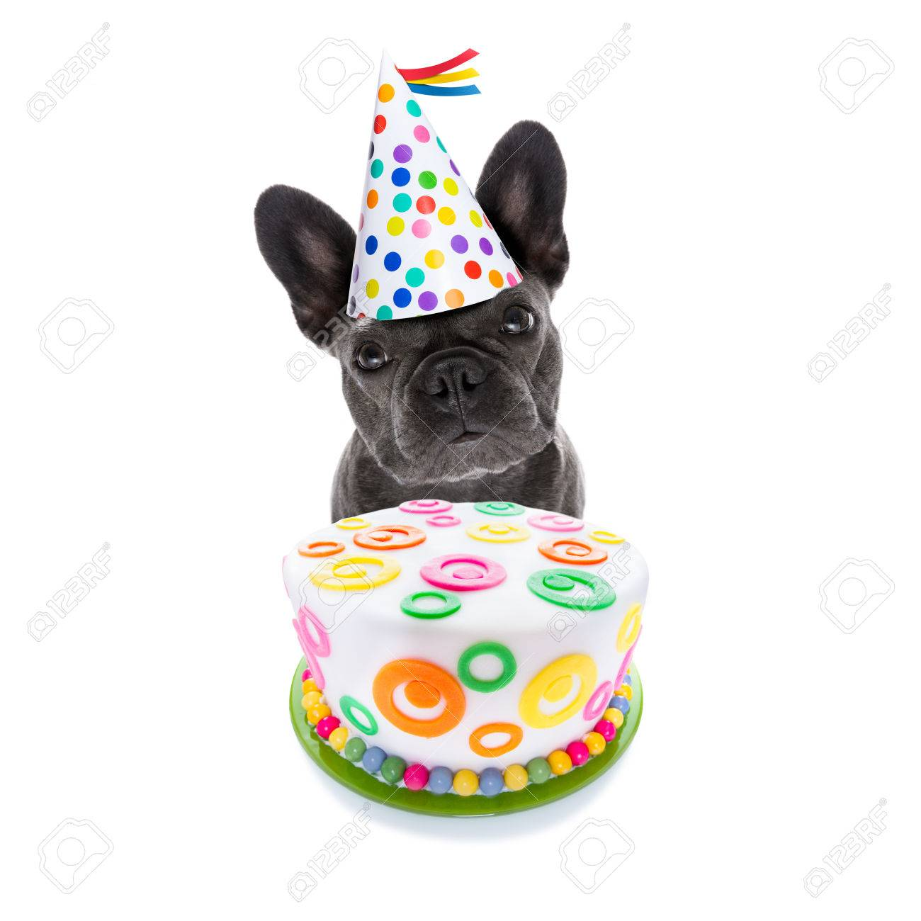 French Bulldog Dog Hungry For A Happy Birthday Cake Wearing Party Hat Isolated On