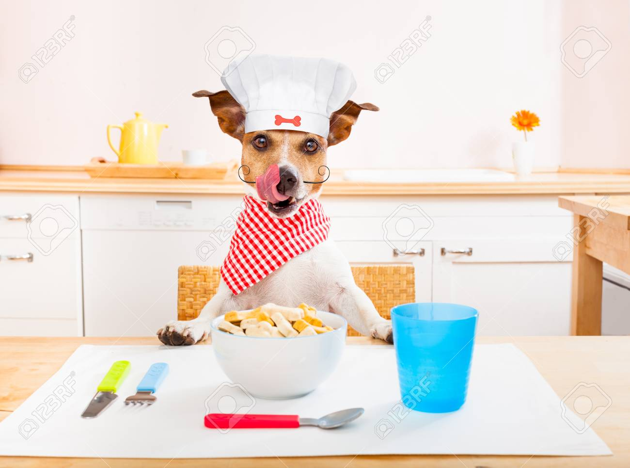 Funny Hungry Jack Russell Dog In Kitchen Cooking Or Eating On ...