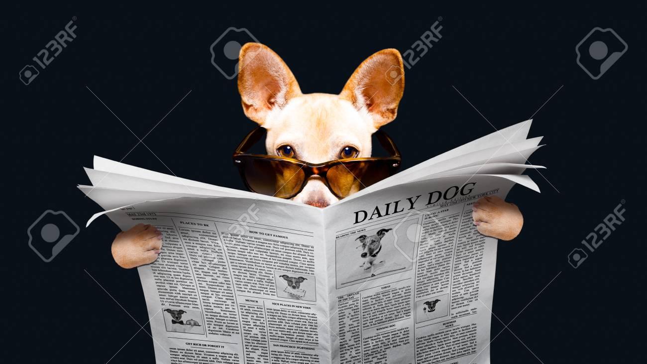 Podenco, Hond, Lezende, Een, Krant, Magazine, Geïsoleerde, Op, Zwarte  Achtergrond, Vervelend, Zonnebril Royalty-Vrije Foto, Plaatjes, Beelden En  Stock Fotografie. Image 91602756.