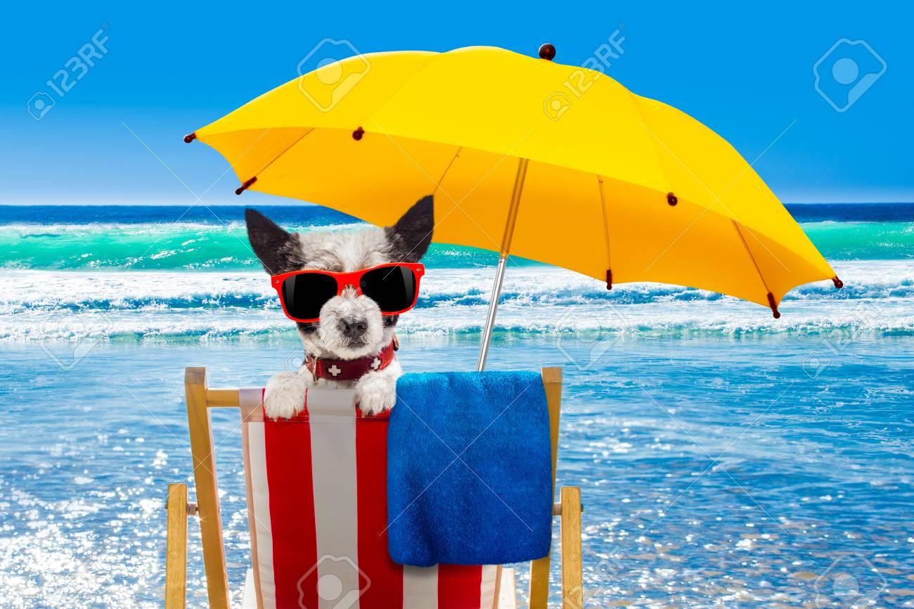95979862-gros-plan-du-chien-caniche-se-reposer-et-se-d%C3%A9tendre-sur-un-hamac-ou-une-chaise-de-plage-sous-un-parap.jpg