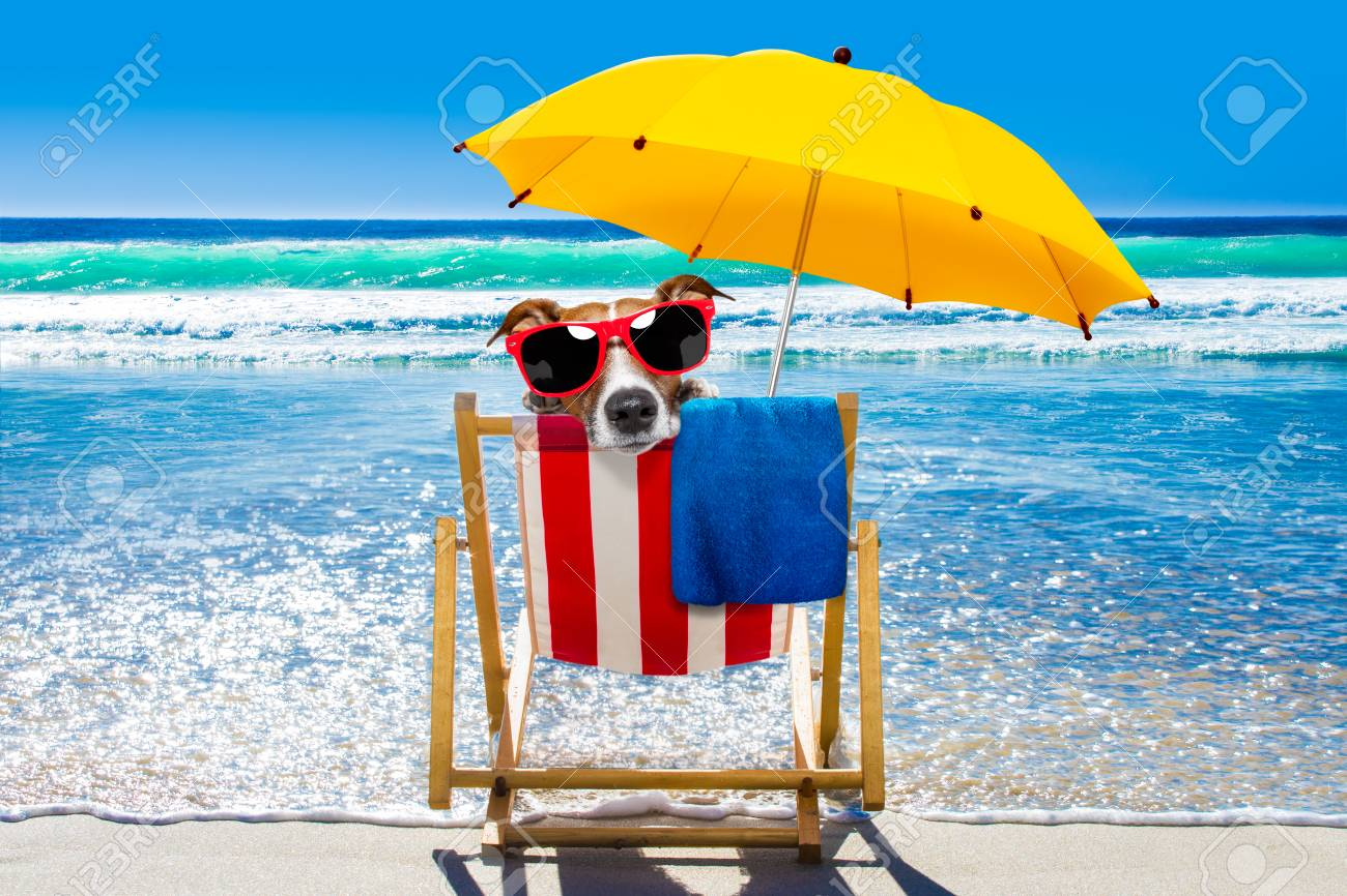 jack russell dog resting and relaxing on a hammock or beach chair