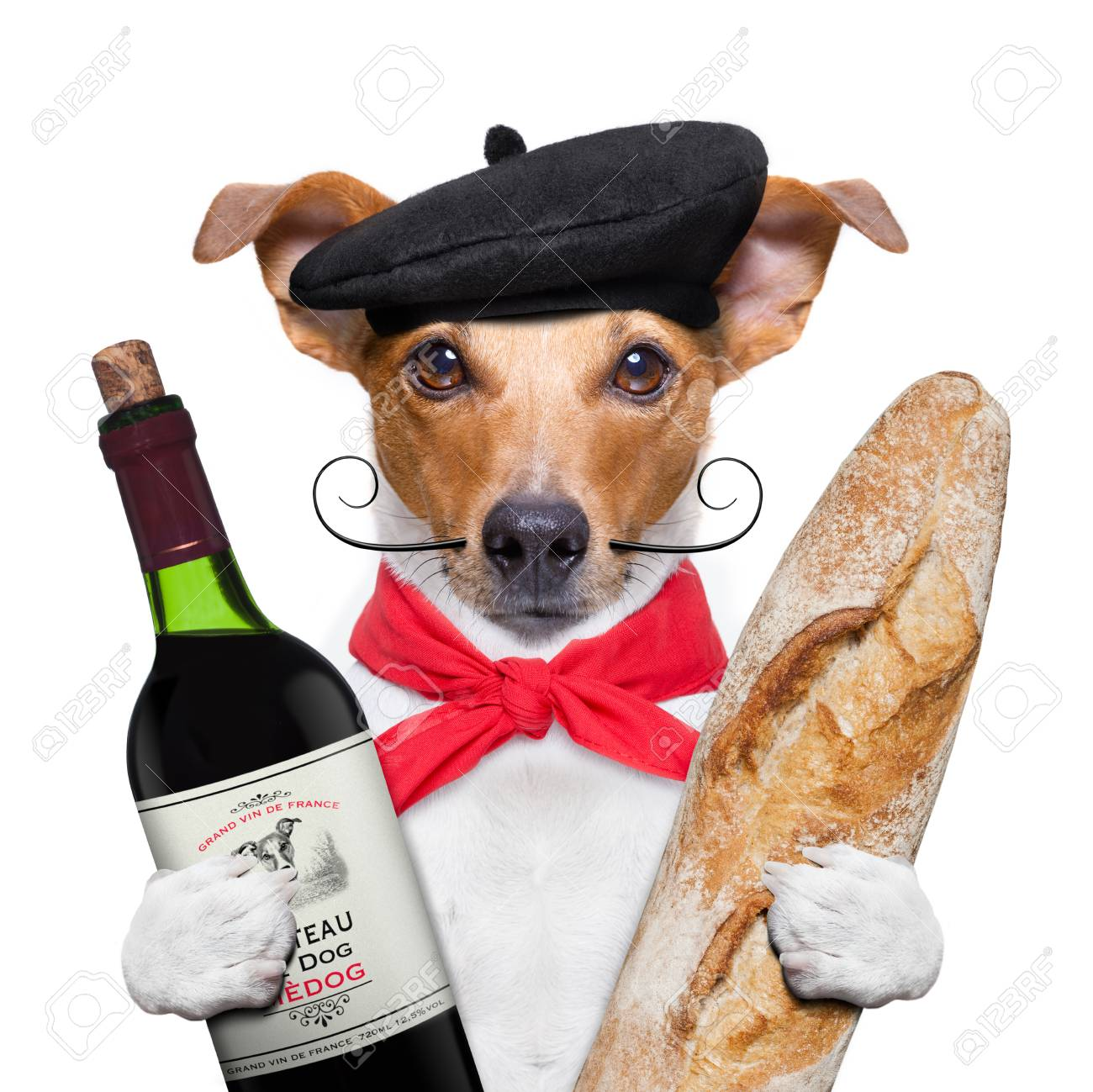 french jack russell dog with red wine baguette and beret, isolated on white background - 99699791