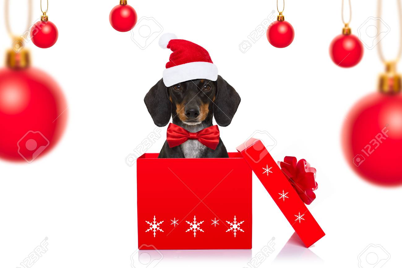 Christmas Santa Claus Dachshund Sausage Dog As A Holiday Season