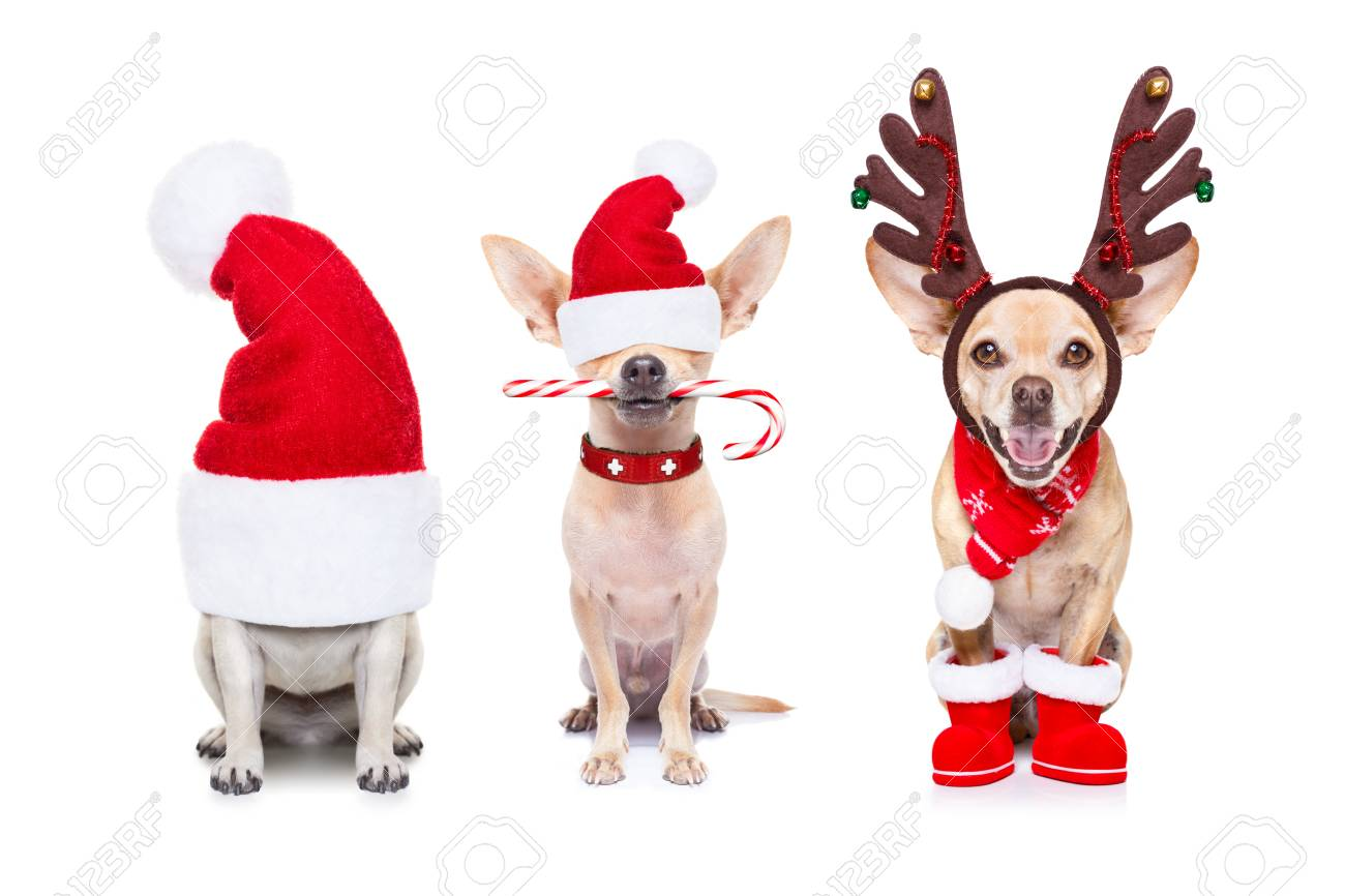 Christmas Santa Claus Row Of Dogs Isolated On White Background ... 0a627e94e467