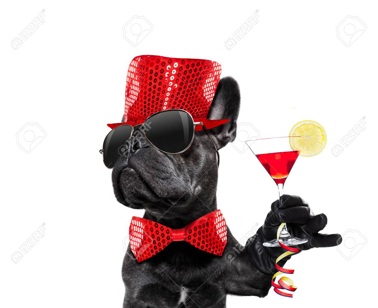 Dog celebrating new years eve with champagne isolated on white - 137047915