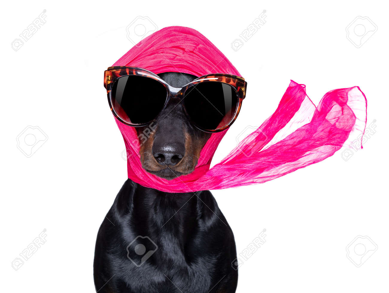 chic fashionable diva luxury cool dog with funny sunglasses, scarf and necklace, isolated on white background - 150166109