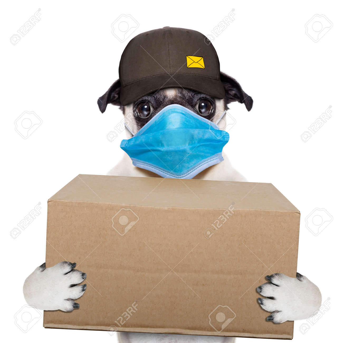 postman pug dog delivering a big brown package, in covid 19, cornavirus, virus time - 157444839