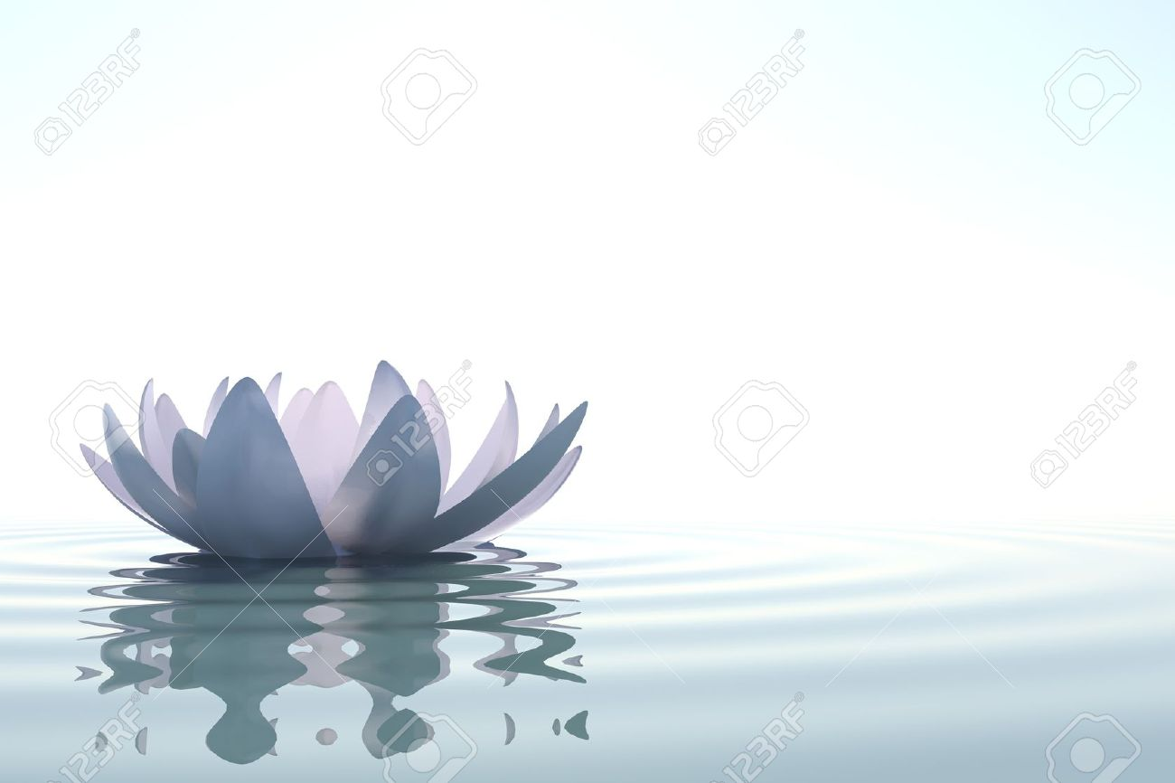 Zen Flower Loto In Water On White Background Stock Photo, Picture ...