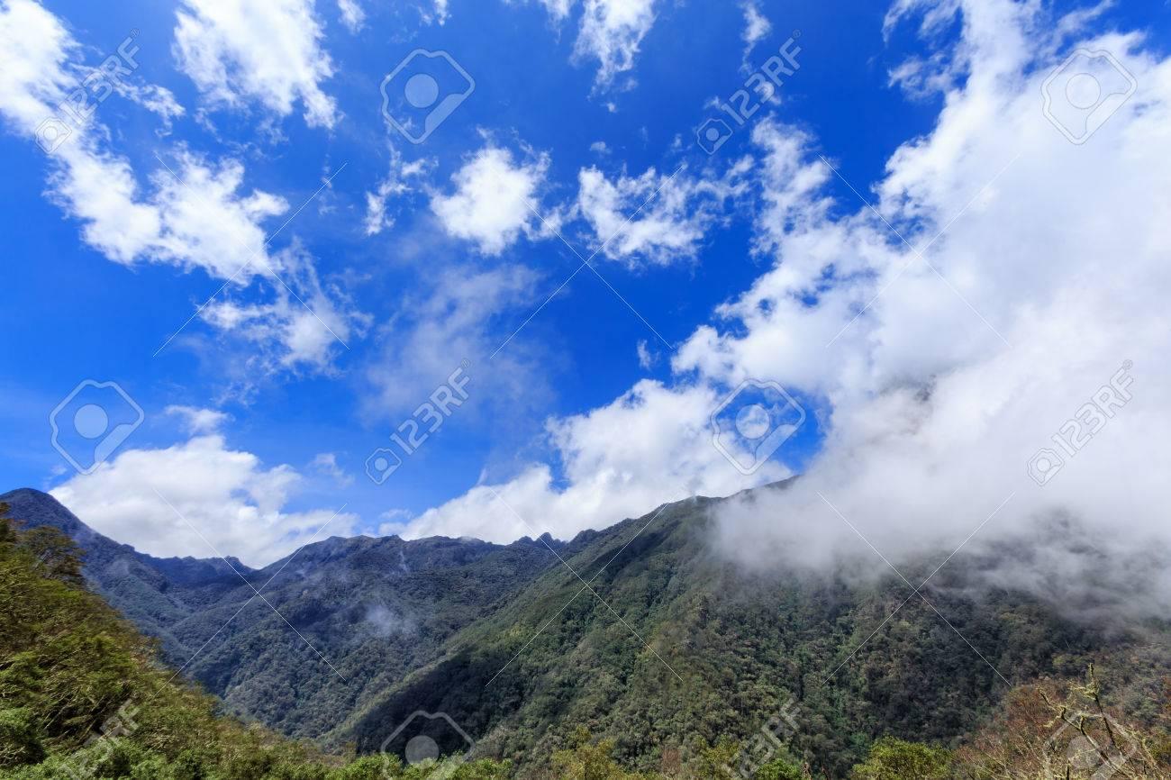 広角の雲霧林サレント、コロンビ...