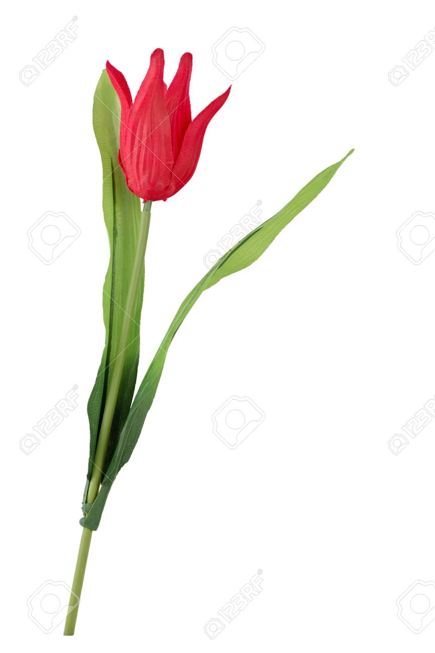 Decorative artificial flower  Tulip, Tulipa   Isolated on white Stock Photo - 16526100