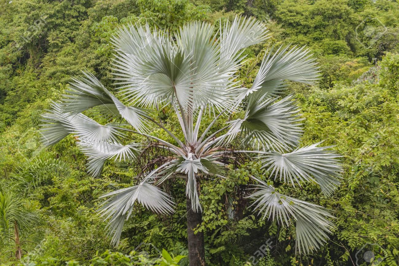 Große Tropische Pflanzen Im Botanischen Garten Von Guayaquil ...