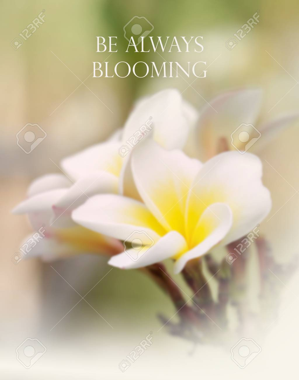 inspirational and motivation quote on blurred flower background