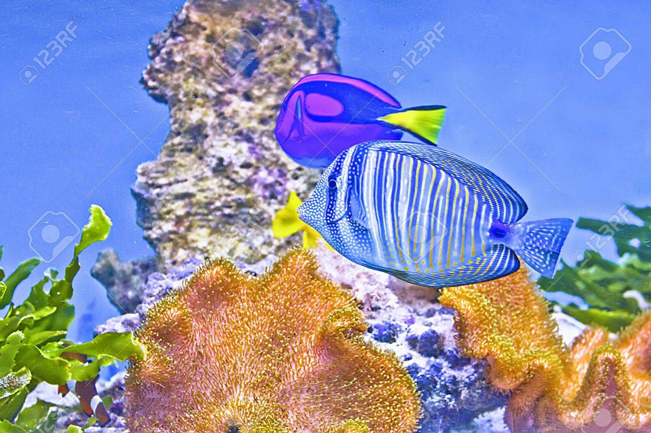 Coral fishes  Sea and ocean world Stock Photo - 14004662