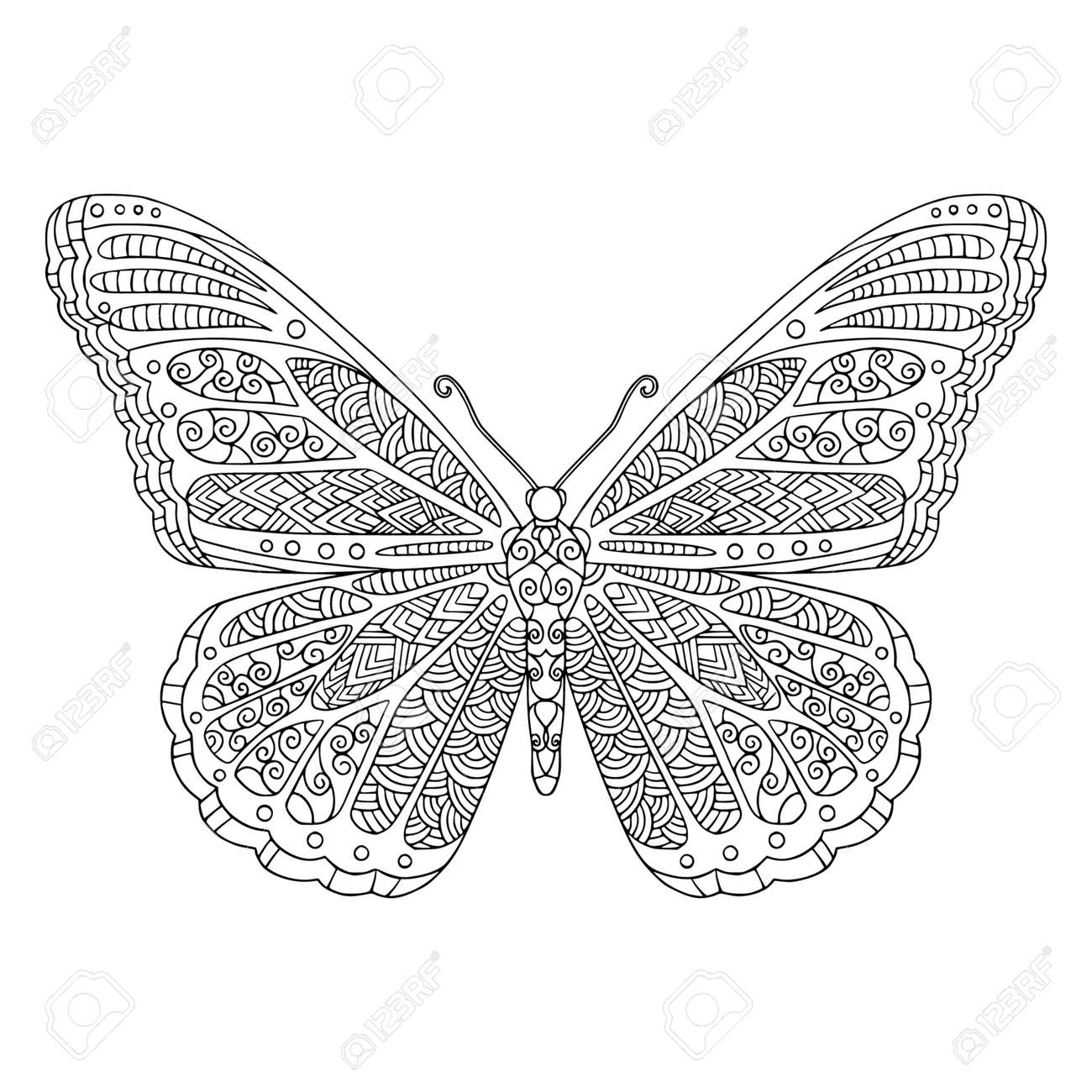 Tropical butterfly with decorated wings coloring page. Vector outline illustration with doodle elements for coloring book for adult. Lovely garden insect. - 168292313