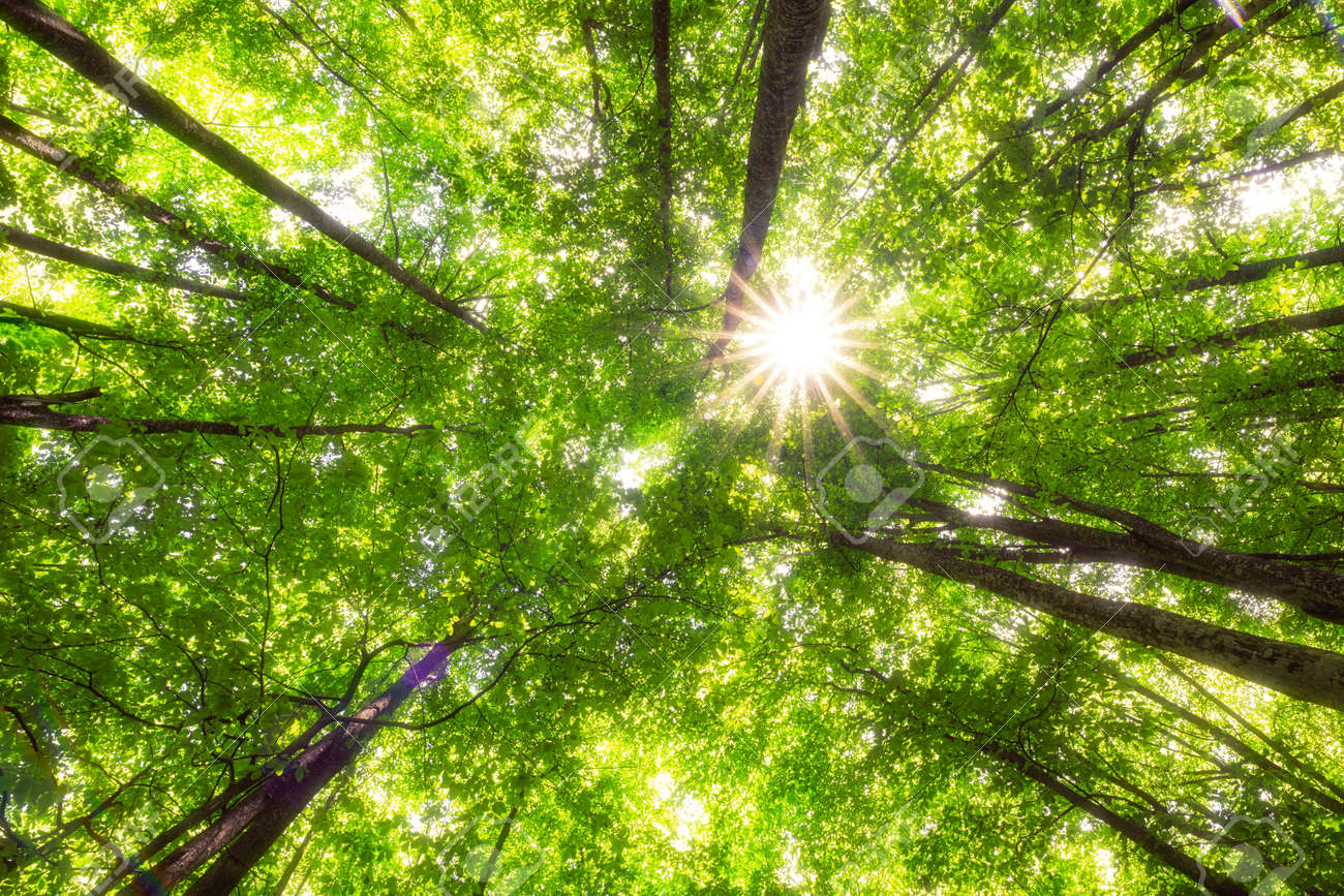 Green trees in a forest. Fresh green and ecology. - 159745759