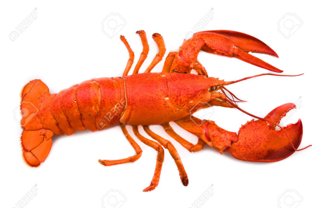 Lobster Stock Photo - 12102234