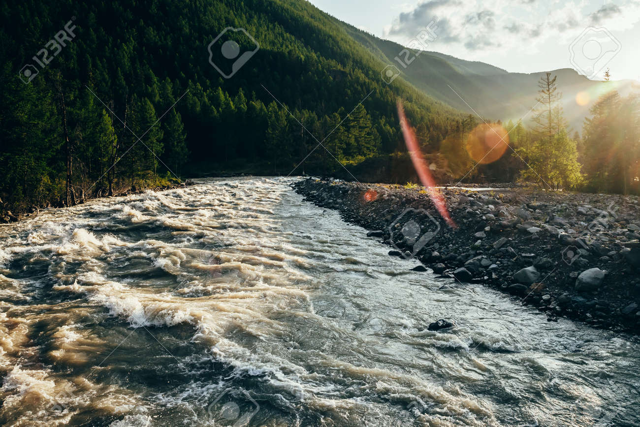 Beautiful view to powerful mountain river in golden light. Scenic landscape with mountain river along forest in sunbeams. Picturesque sunny scenery with gold rapids on fast river with stony shore. - 170495249