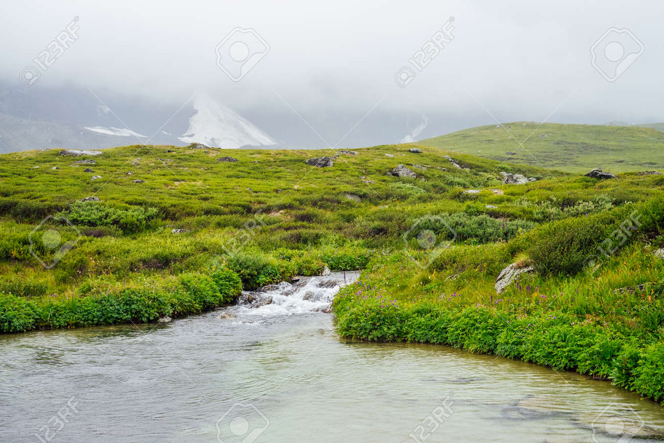 Vivid green alpine landscape with mountain creek among rich vegetation and mountains among low clouds. Colorful scenery with mountain brook, wild flora and rocks in fog. Scenic nature of highlands. - 170494831
