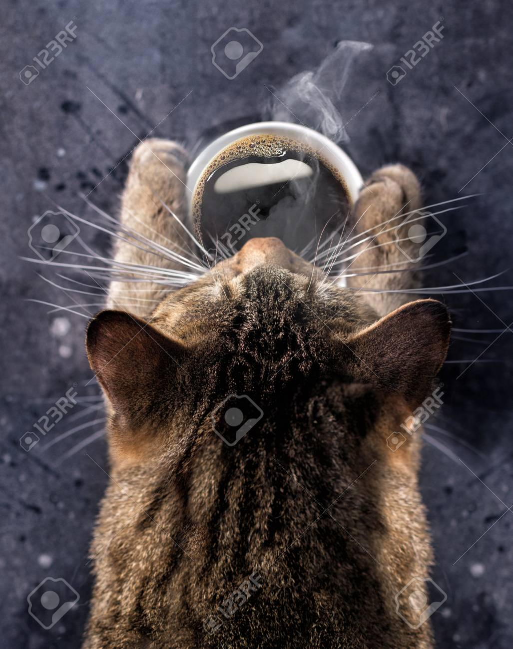 Cat's paws hold a cup of hot black coffee. A gray cat bent over a cup of coffee with steam. - 81150021