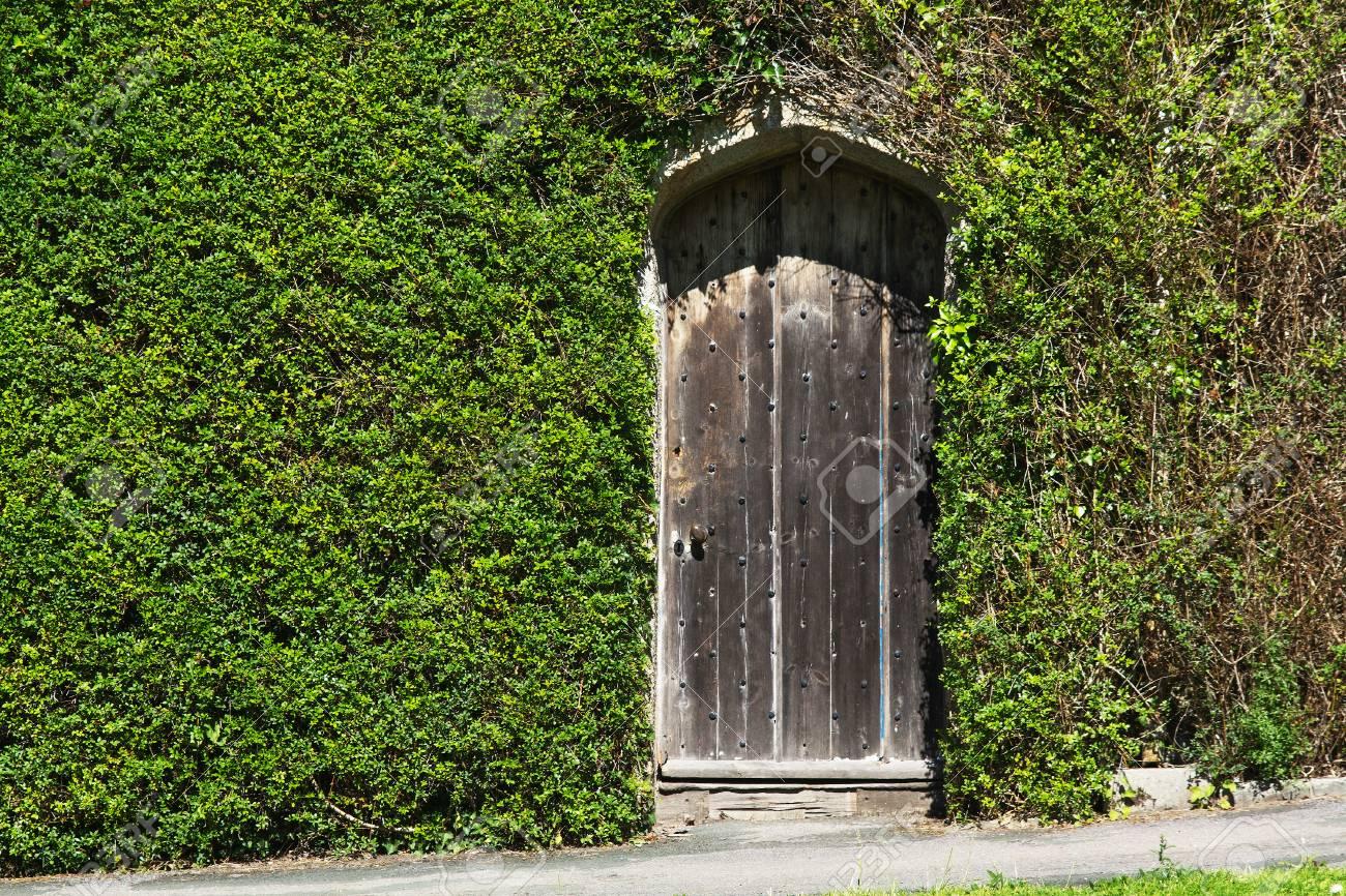 壁に古いドア。カーリーの植物と...