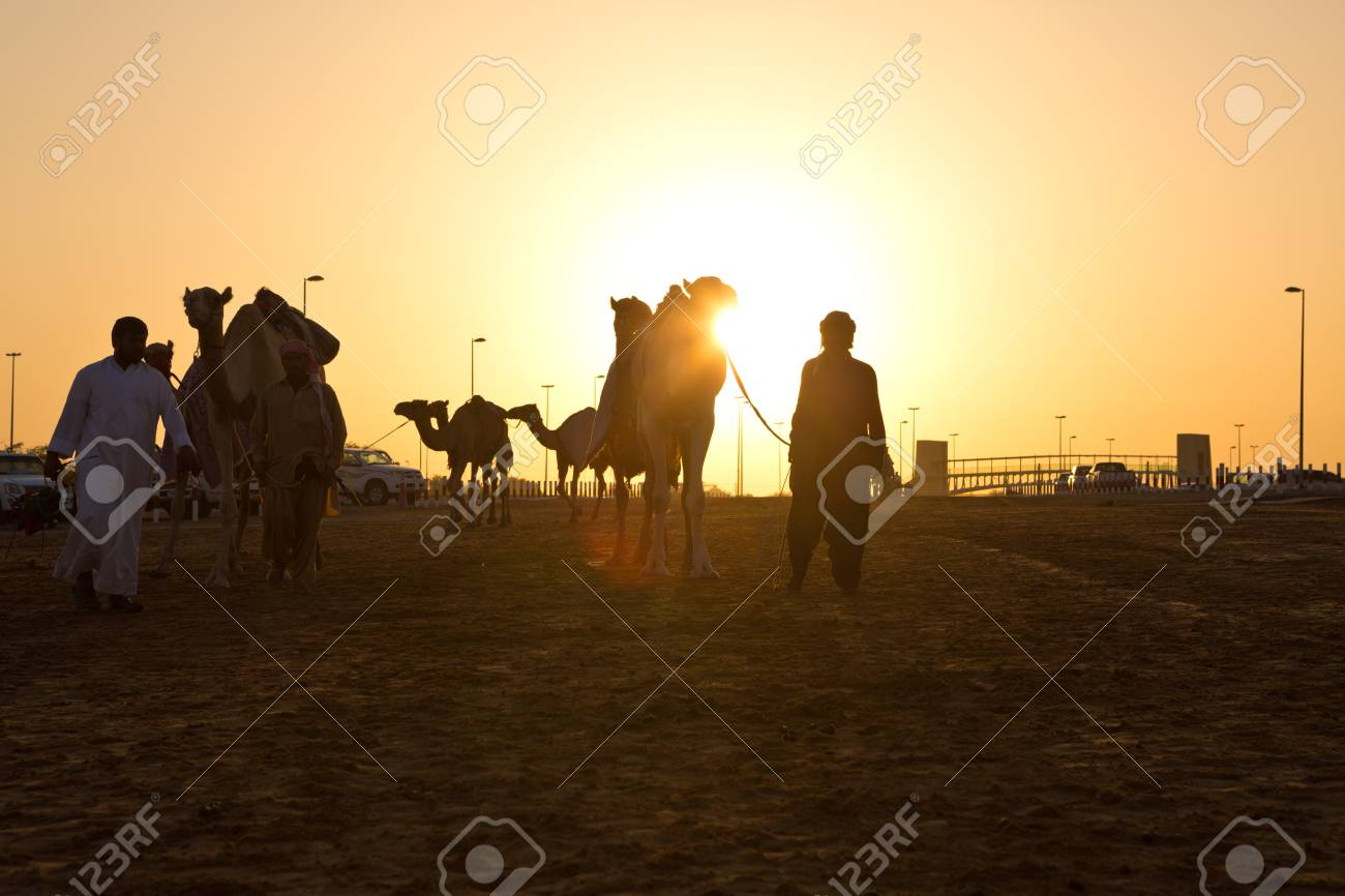 Dubai camel racing club sunset silhouettes of camels and people dubai camel racing club sunset silhouettes of camels and people stock photo 49230433 thecheapjerseys Image collections