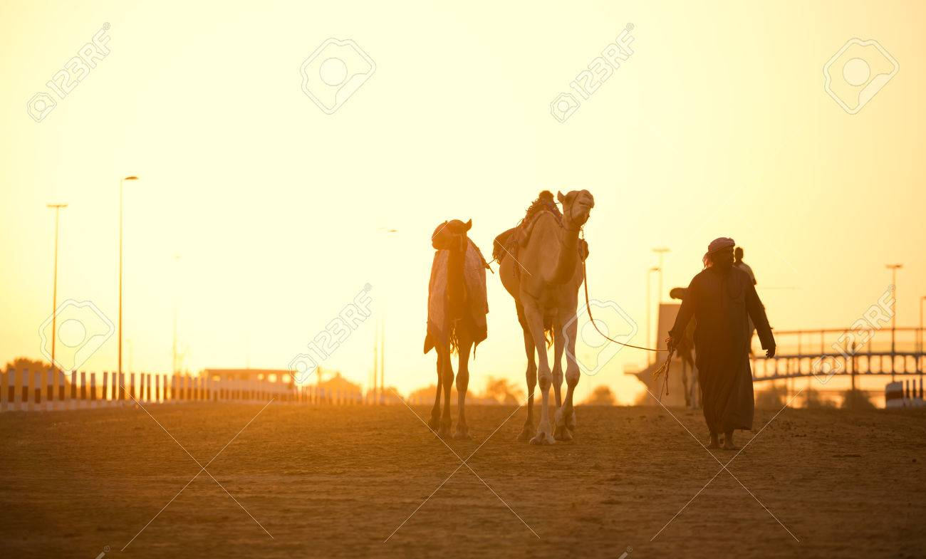 Dubai camel racing club sunset silhouettes of camels and people dubai camel racing club sunset silhouettes of camels and people stock photo 49200421 thecheapjerseys Image collections