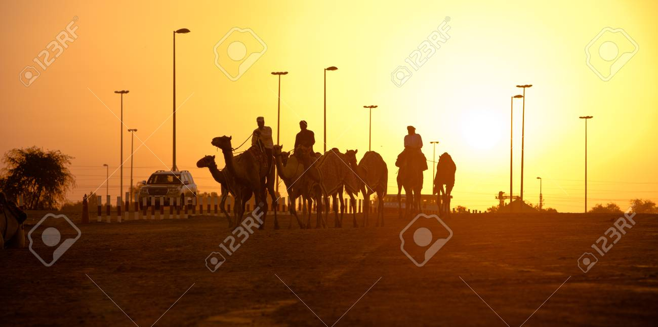 Dubai camel racing club sunset silhouettes of camels and people dubai camel racing club sunset silhouettes of camels and people stock photo 49200432 thecheapjerseys Image collections