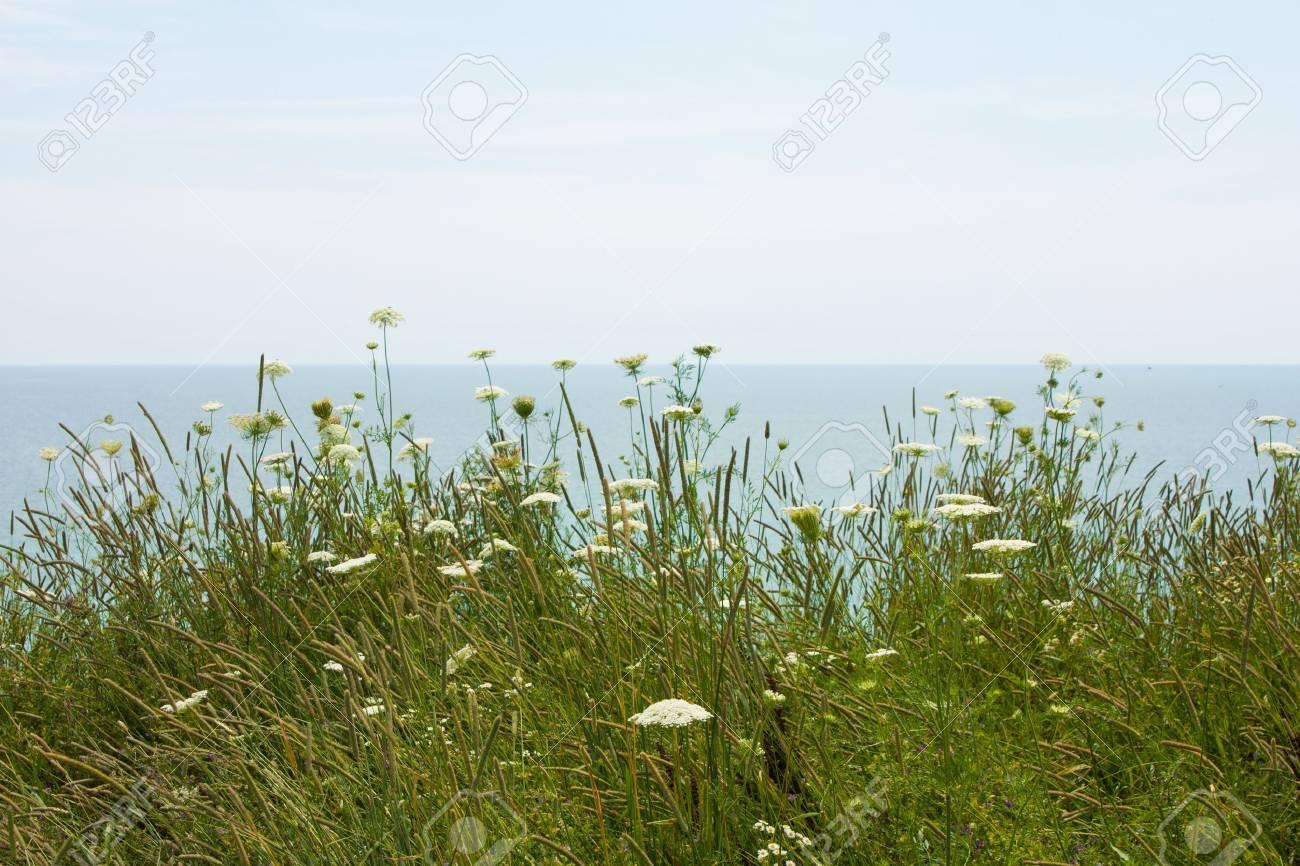 wild field flowers blow gently in the wind on Lake Erie - 21824712