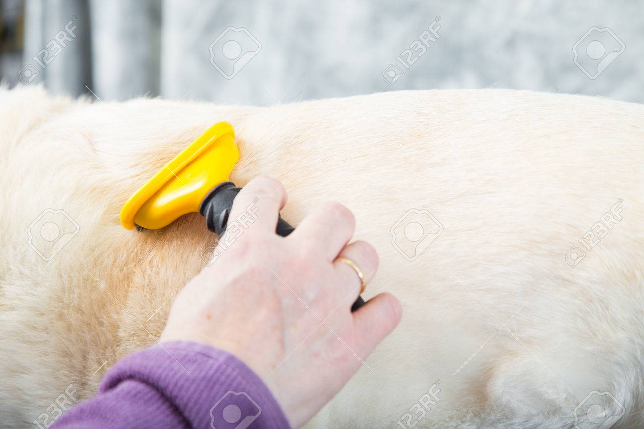 A dog groomer brushing a dog to remove the loose undercoat - 29304293