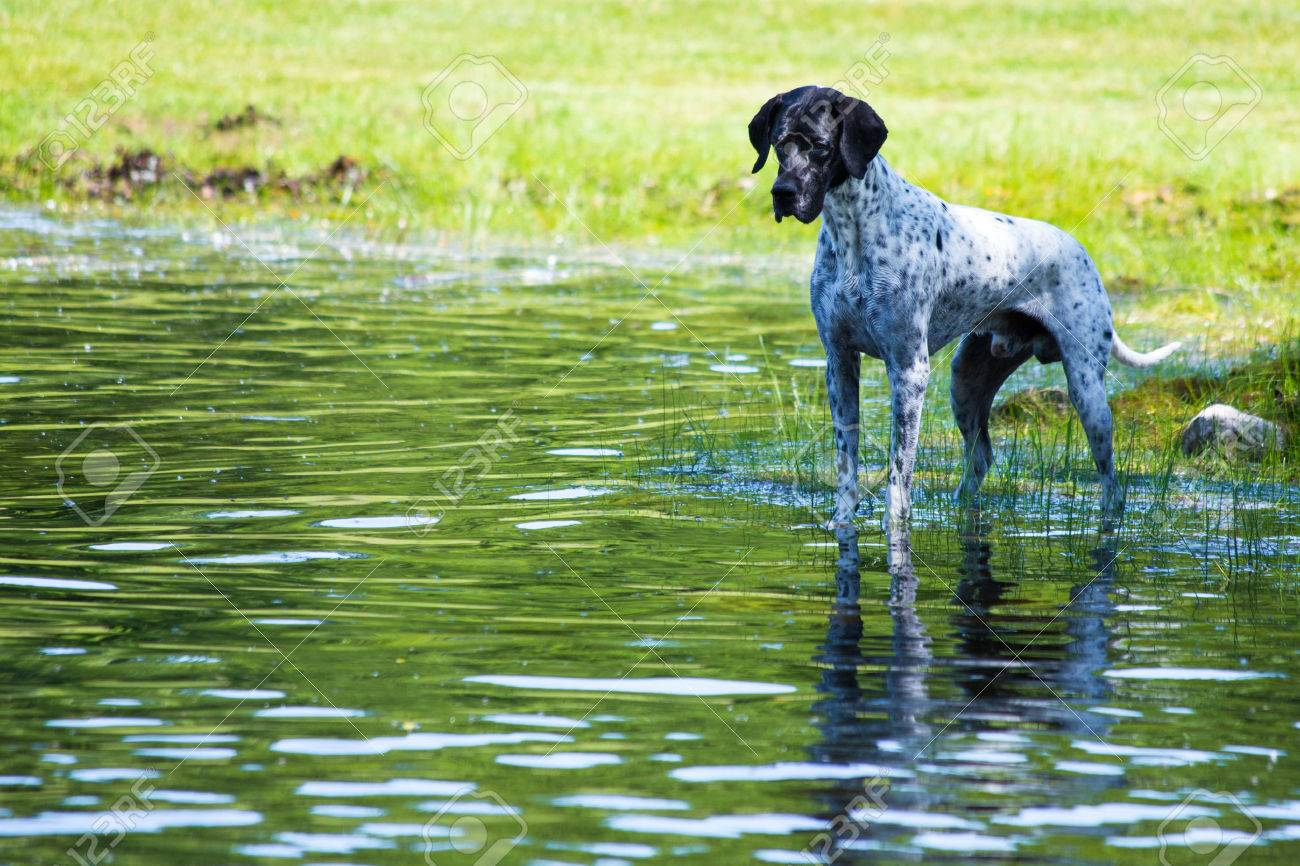 This dog was facsinated with watching the tadpoles in the pond - 30121133
