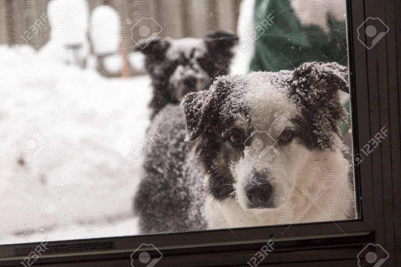 A Dog Looks In At The Camera Through The Screen Door Another