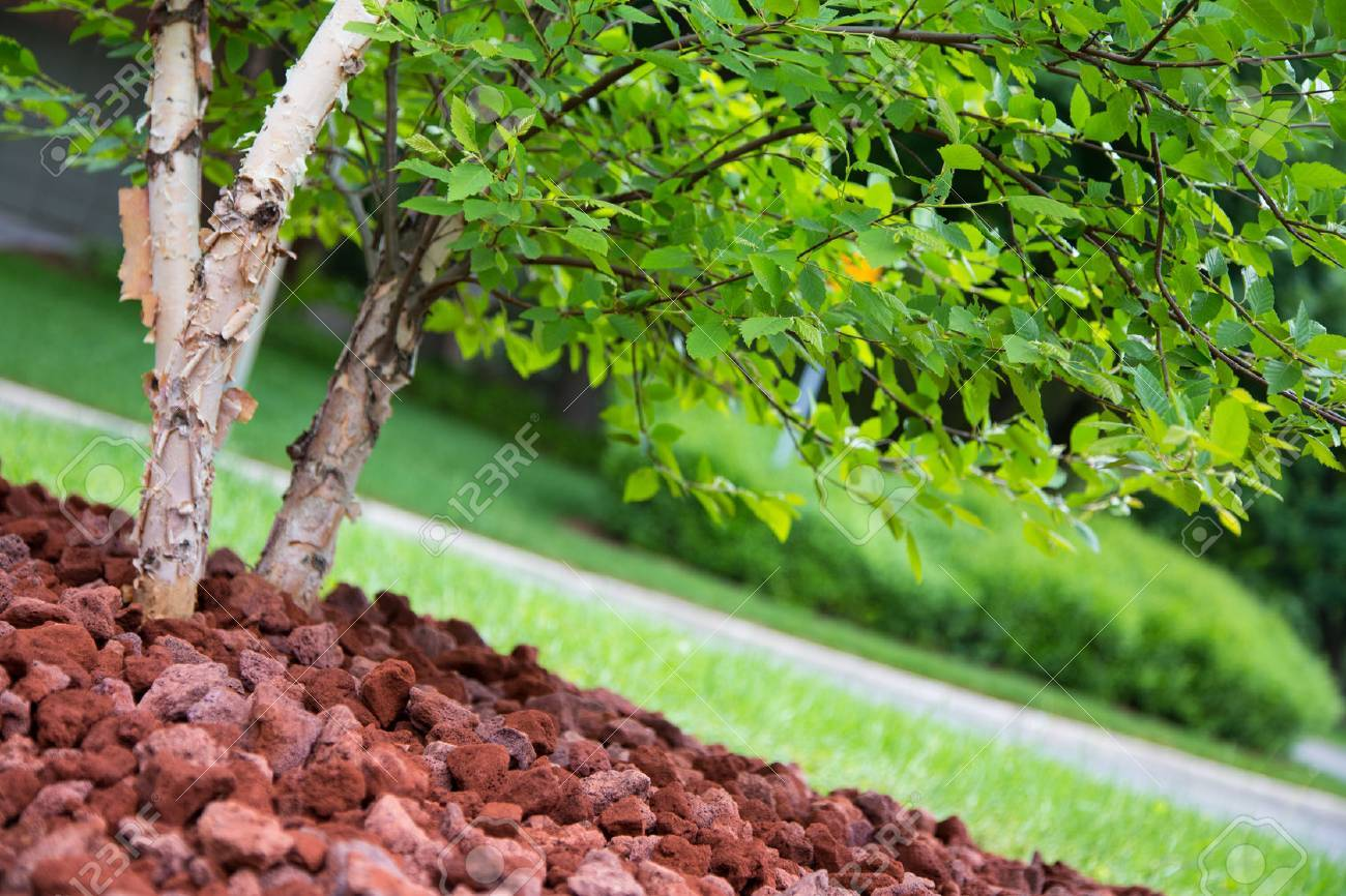 Shallow depth of field on garden landscaping focused of tree foliage - 54978423