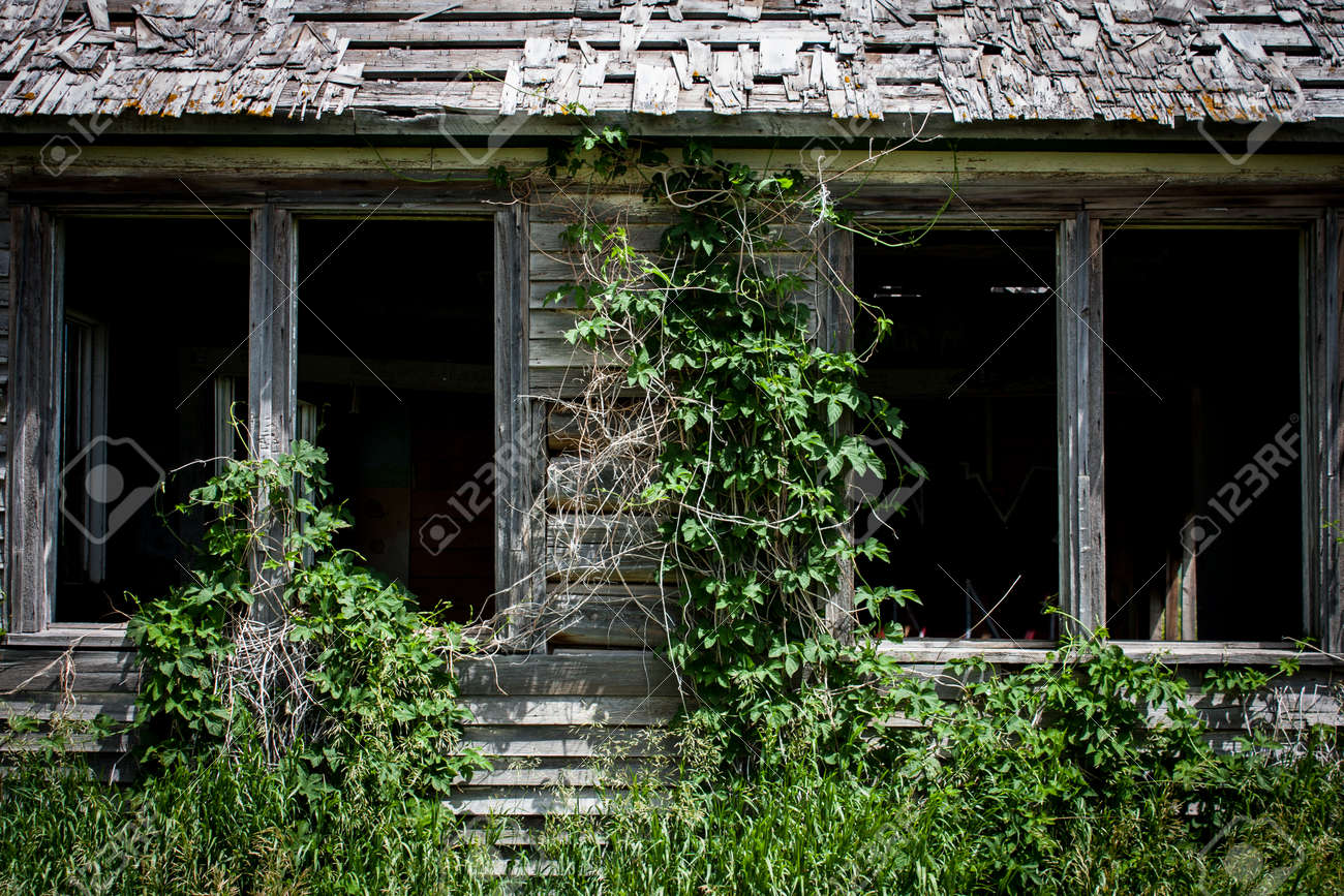 Ivy and weeds overgrowing an old wood clad homestead - 166911882