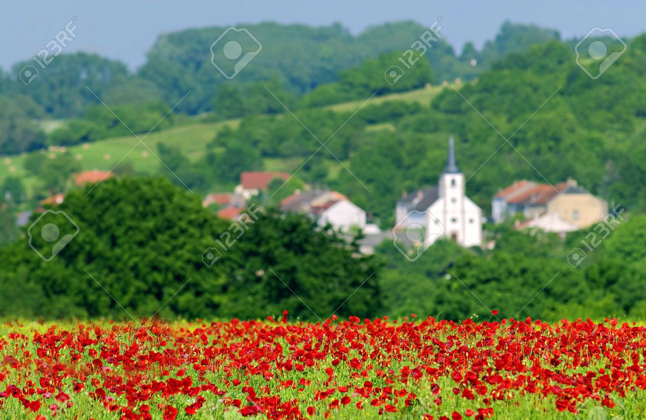 Poppies In A Field In The French Countryside Stock Photo Picture - French country side